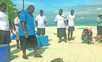 Turtles Released From Treasure Island