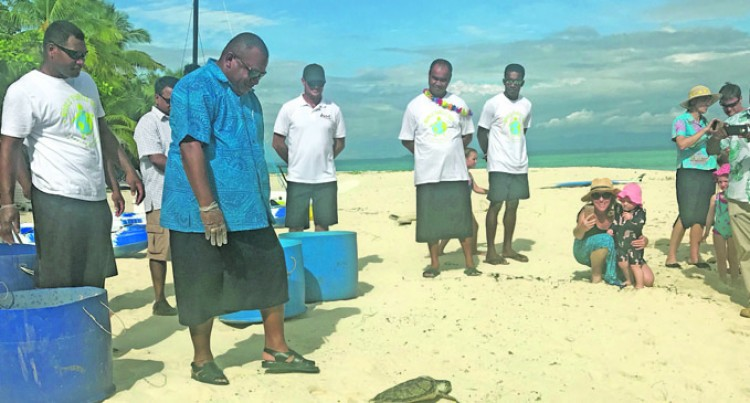 Turtles Released From Treasure Island