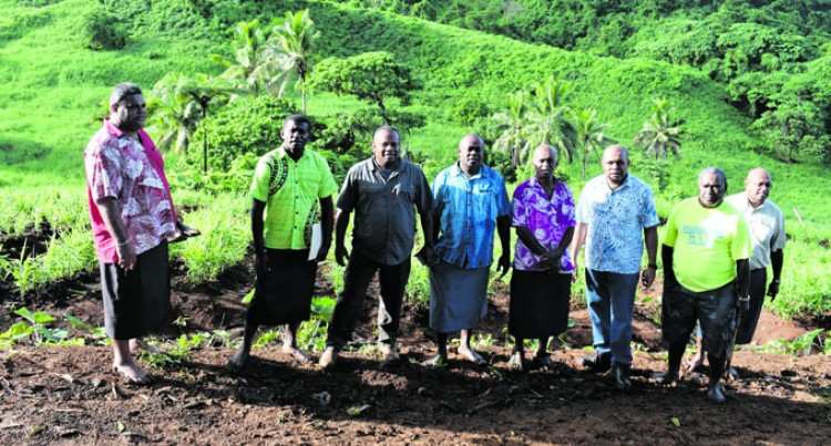 Navunimono Group Turns  To Ginger For Spiritual Growth