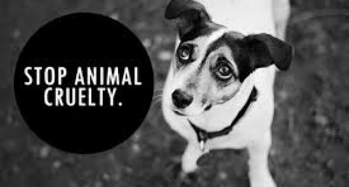 Event To Raise Awareness On Cruelty To Animals