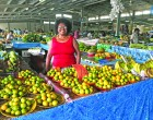 No Regrets After selling At Market for Four Decades