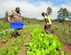 Let's Talk Agriculture Development