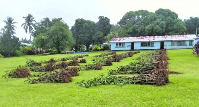Govt's Agri Millionaire Plan Reaps Rewards for Sawaieke Youths