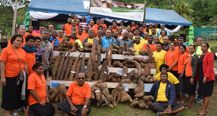 Yam Show to Boost Production Up North