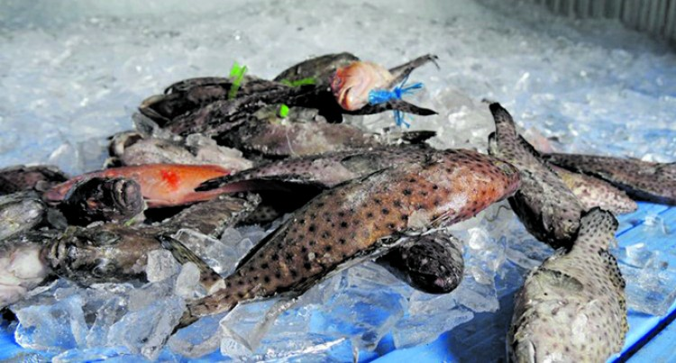 Ministry: Can't Lift Ban On Grouper Fish
