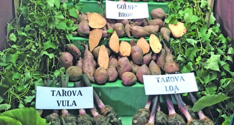 Ministry Releases New Dalo And Kumala Varieties