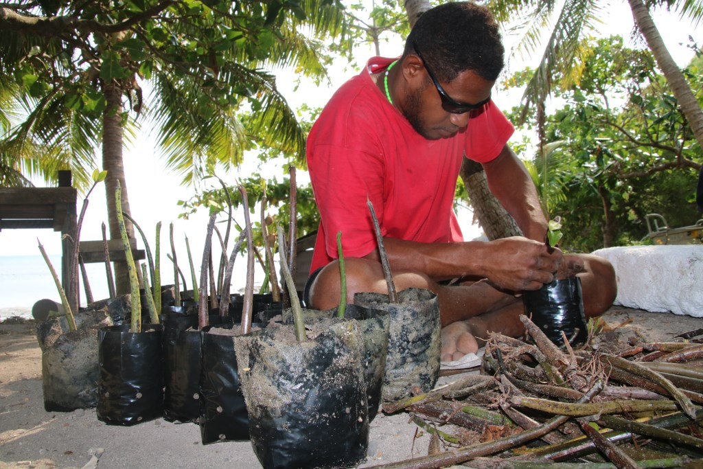 A Nacula villager potting mangrove propagules. Photo: WWF-Pacific