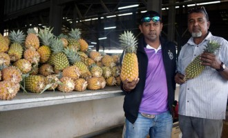 Bachelor Toils Land, Makes Thousands From Harvest