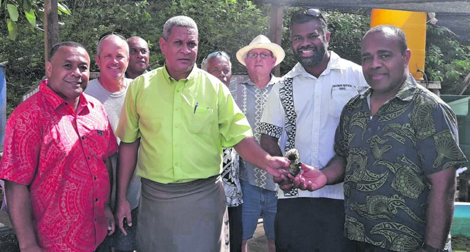 The Vanua Trust of Laucala Receives its First Allotment of Giant Clams