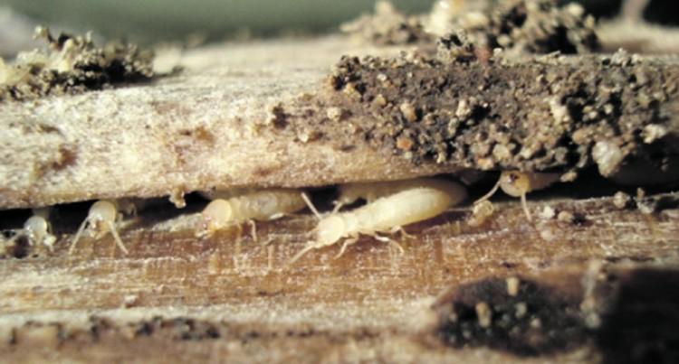 Measures Taken To Contain Termites