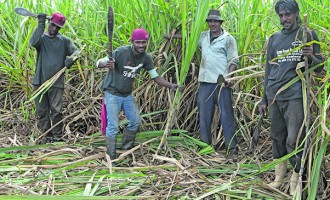 North Cane Farmers Label Budget As Promising