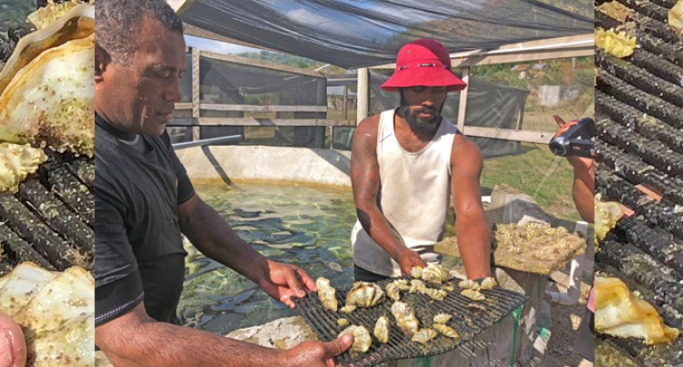 Ministry, Resorts To Boost Giant Clam Revival