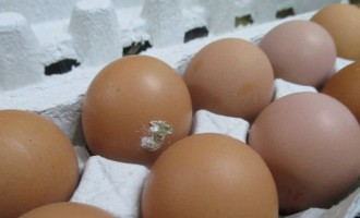 Sub-standard Eggs Place Consumers at Risk