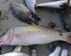 Minister Moots Fishermens'  Association For Vatoa