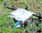 2000 Plants Seized In Cakaudrove