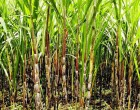 Appointments To The Board Of The New Sugarcane Growers Fund