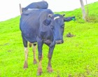 Govt, Co-Operative Working To Improve Dairy Industry