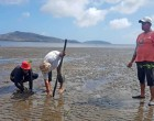Planting Mangroves To Protect Fishing Grounds