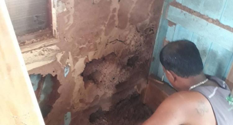 Termite Invasion At Another Drasa Home, Lautoka