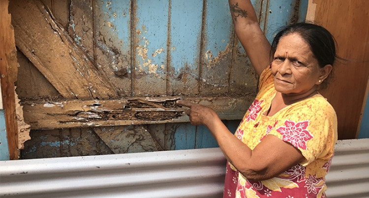 Termites leave our home as though it were on fire: Resident