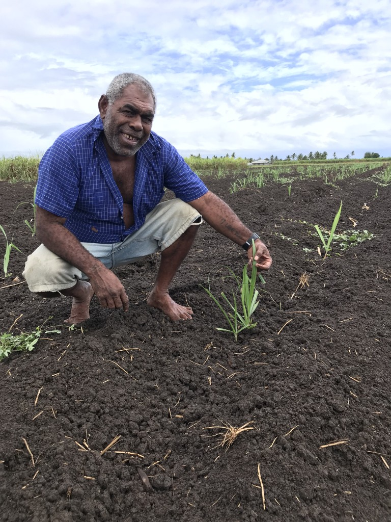 Inoke Navunilagi holds the new ratoon which would flourish after the rainfall  in Lovu Lautoka on 7th September, 2018.