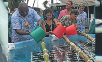 Savusavu 'Blue Economy' Pearl Hatchery Launched
