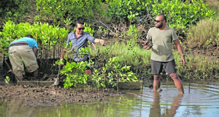 Mangroves Planted To Protect Coastal Erosion, Contain Flooding