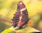 Sharon's Butterfly Wins Photo Contest