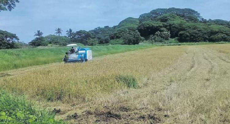 Fiji Rice Project At Maunidevo To Produce 250 Tonnes Of Paddy