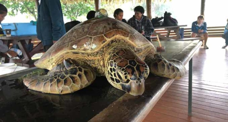 10-Year Harvest, Sale Ban Of Turtles Ends