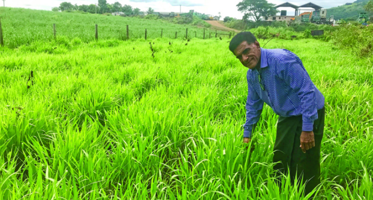 Sabeto Family Hopes to Rake in Millions Through Grass Project