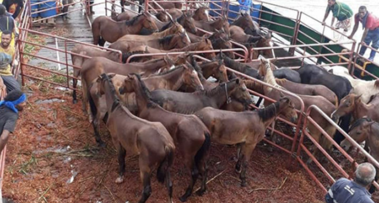 32 Horses Reach Gau Island To Assist Farmers