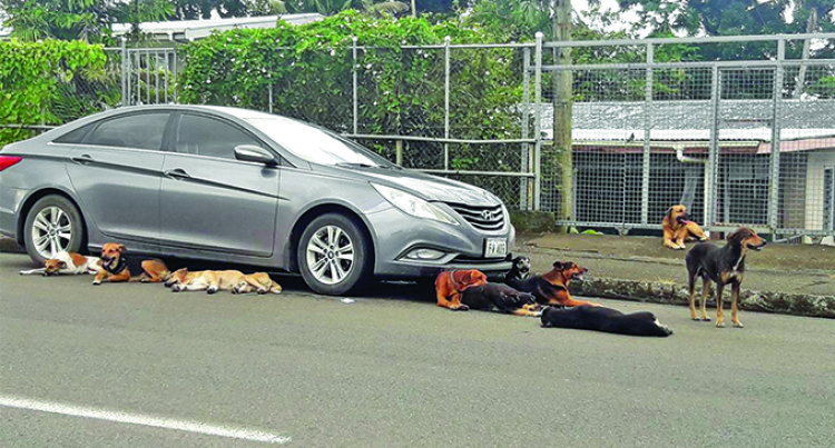 Public Concerned For Their Safety From Stray Dogs