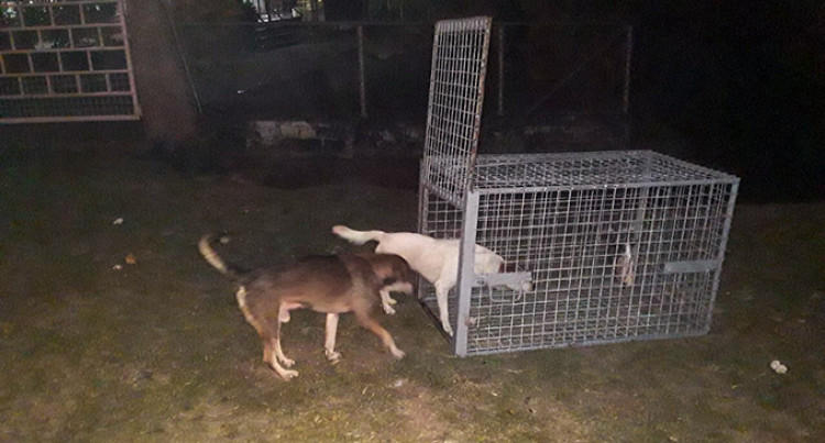 Human Negligence, A Contributing Factor To Stray Dogs