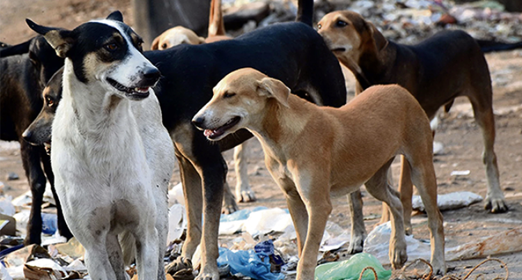 Hunt For Stray Dogs Starts