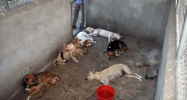 42 Strays Trapped, Placed In Animal Shelters