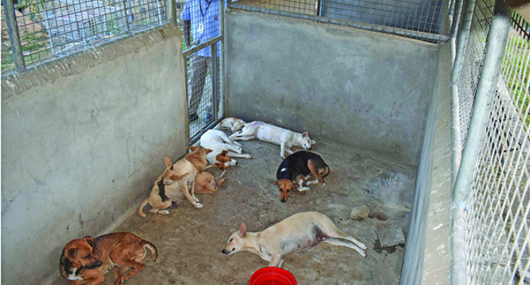 42 Stray Dogs Trapped, Placed In Animal Shelters