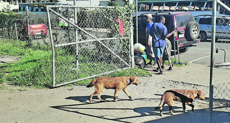 SPCA: Stray Dog Problem Is Human Error