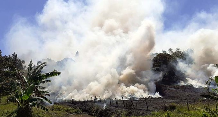 Burning Of Sugarcane Leads To Huge Loss To Labasa Farmers