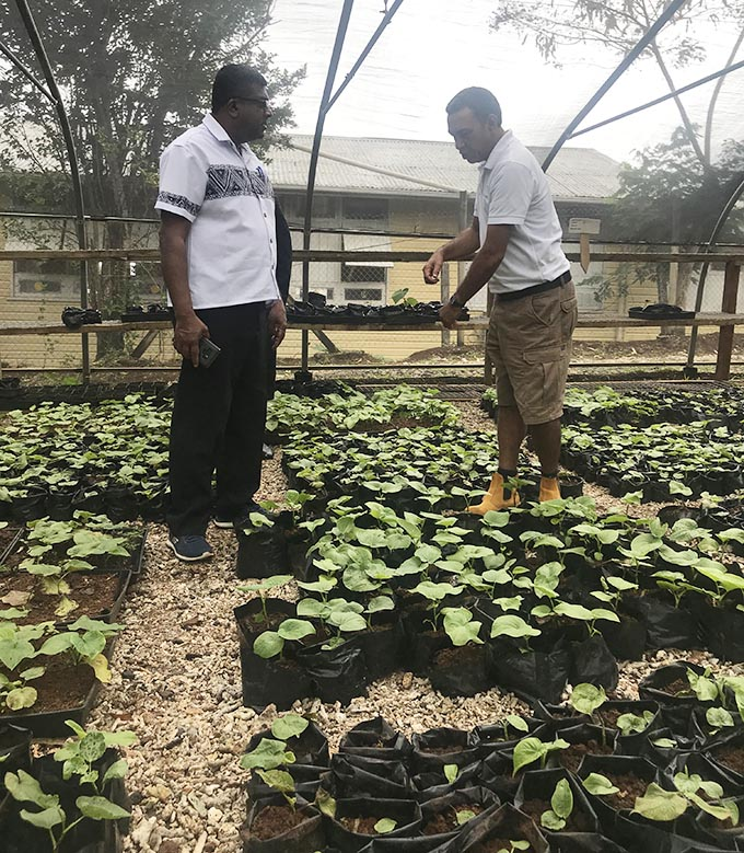 Sanfred Smith, right of Fiji Kava Limited explains to Minister of Agriculture, Rural and Maritime Development, Waterways and  Environment Mahendra Reddy the planting procedures inside their kava nursery in Levuka, Ovalau on August 30, 2019.