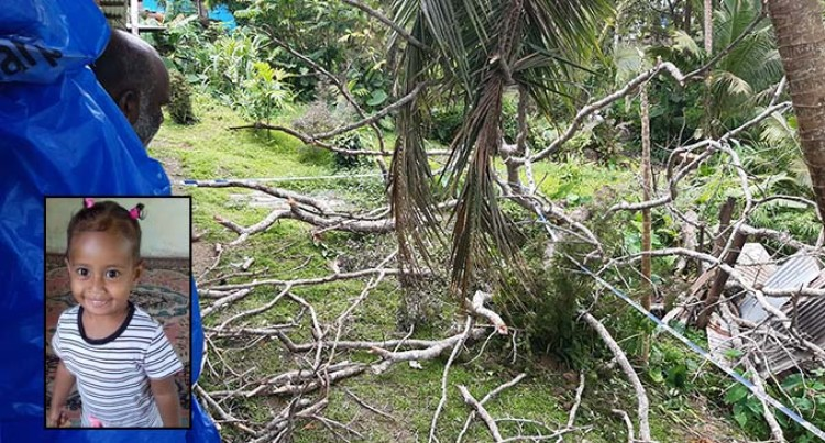2 Year Old Girl Killed By Falling Tree In Lami