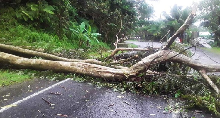 FRA Road Advisory: Multiple Fallen Trees Blocking The Roadway At Colo-i-Suva
