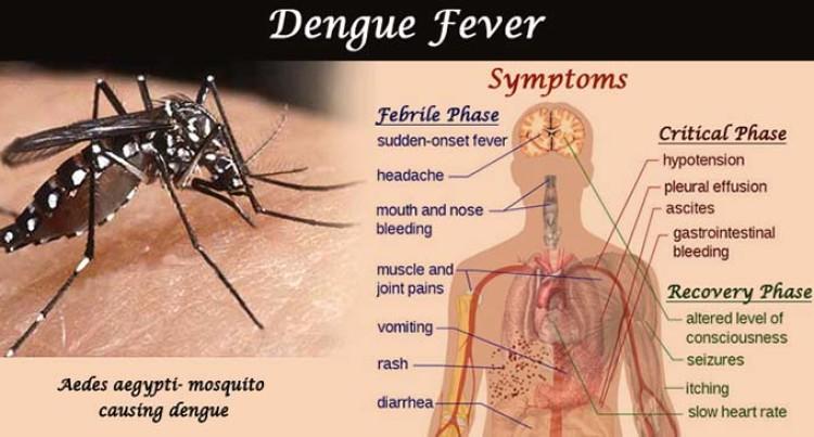 24 Dengue Cases In Vanua Levu