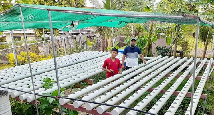 Father, Son Venture Into Hydroponic Farming In Ba