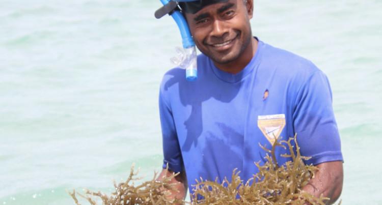 Ex British Army Soldier Ventures Into Seaweed Farming