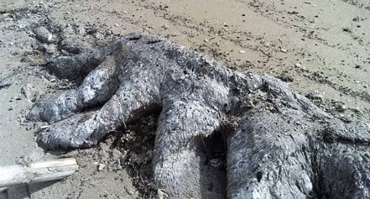 Mysterious Creature Washes Ashore At Nakodu Village