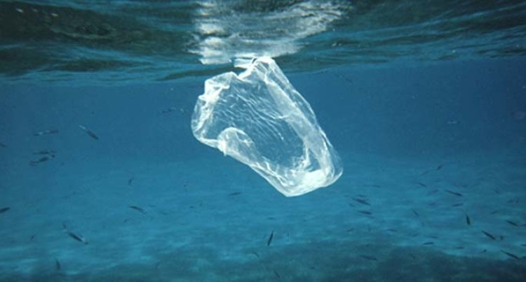 Editorial: The Voiceless Victims Of Plastic Pollution; A World Of Innocent Marine Life