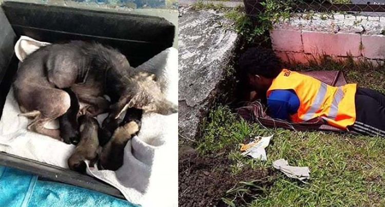 Puppies Trapped in Culvert Now In Safe Hands At SPCA