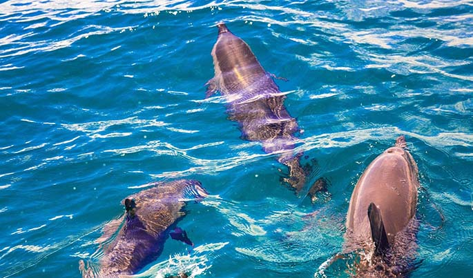 The eco resort became renowned for dolphin watching. Photo: Takalana Bay Resort