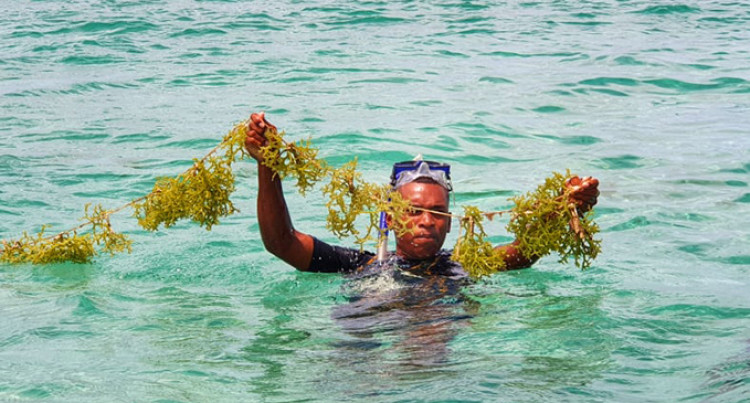Seaweed Farmers Of Kaba Add Value To Their Business Venture